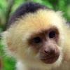 https://gof.su/forum/img/gof_npc/monkey00b.jpg